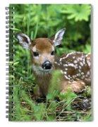 White-tailed Deer Odocoileus Spiral Notebook