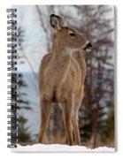 White-tailed Deer Three Spiral Notebook