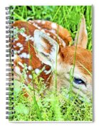 White-tailed. Virginia Deer Fawn Spiral Notebook