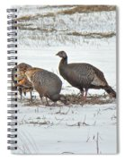Wild Turkey - Meleagris Gallopavo Spiral Notebook