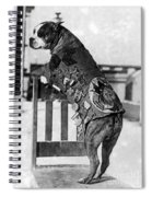 Wwi, Sergeant Stubby, American War Dog Spiral Notebook