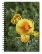 Yellow And Orange Poppy Spiral Notebook