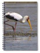 Yellow Billed Stork Spiral Notebook