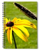 1 Yellow Daisy 2 Yellow Bugs Spiral Notebook