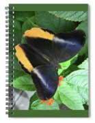 Yellow-edged Giant Owl Butterfly #6 Spiral Notebook