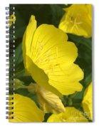 Yellow Evening Primrose Spiral Notebook