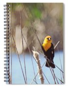 Yellow-headed Blackbird Spiral Notebook