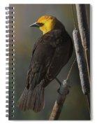 Yellow Headed Blackbird On Cattails Spiral Notebook