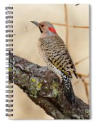 Yellow-shafted Northern Flicker Spiral Notebook