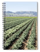 Young Broccoli Field For Seed Production Spiral Notebook