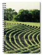 Young Soybean Plants Spiral Notebook