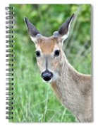 Young White-tailed Buck In Velvet Spiral Notebook