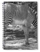 Zebra In Black And White Spiral Notebook