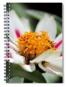 Zinnia Named Zahara Starlight Rose Spiral Notebook