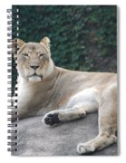 Zoo Lion Spiral Notebook
