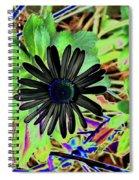 10-15-16--4996 # 2 Montauk Daisy Don't Drop The Crystal Ball Spiral Notebook