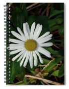 10-15-16--4996 Montauk Daisy Don't Drop The Crystal Ball Spiral Notebook