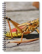 10- Lubber Grasshopper Spiral Notebook