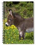 Miniature Donkey Foal Spiral Notebook
