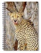 1022 Cheetah Spiral Notebook