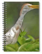 11- Cattle Egret Spiral Notebook