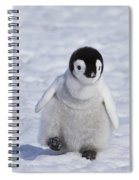 Emperor Penguin Chick Spiral Notebook