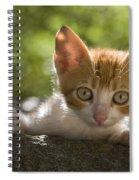 Kitten On A Wall Spiral Notebook