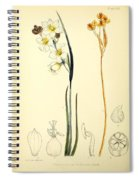 Illustrations Of The Flowering Plants And Ferns Of The Falkland Islands Spiral Notebook