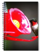 1175 - Hummingbird Spiral Notebook