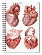 Heart, Anatomical Illustration, 1814 Spiral Notebook