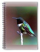 1281 - Hummingbird Spiral Notebook