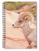 Desert Bighorn Ram Spiral Notebook