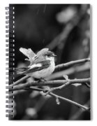 European Pied Flycatcher Spiral Notebook
