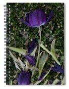 Tulips Wilting Spiral Notebook