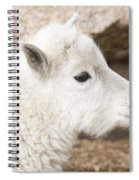 Baby Mountain Goats On Mount Evans Spiral Notebook
