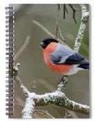 Eurasian Bullfinch Spiral Notebook