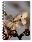 Black Cherry Tree  Spiral Notebook