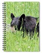American Black Bear Yellowstone Usa Spiral Notebook
