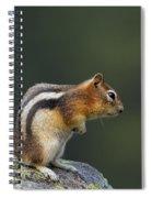 Golden-mantled Ground Squirrel Spiral Notebook