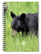 American Black Bear Yellowstone Usa Spiral Notebook