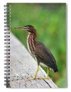 81- Green Heron Spiral Notebook