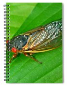17 Year Periodical Cicada Spiral Notebook