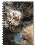 Maine Coon Cat Spiral Notebook
