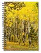 Rocky Mountain Autumn Spiral Notebook