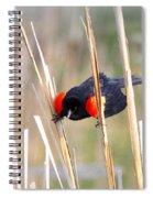 1911 - Red-winged Blackbird Spiral Notebook