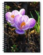 Crocus 0083 Spiral Notebook