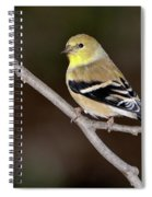American Goldfinch Spiral Notebook