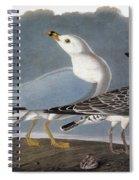 Audubon: Gull Spiral Notebook
