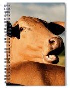 Australian Cows Spiral Notebook