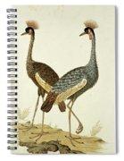Balearica Regulorum Grey Crowned Crane, Robert Jacob Gordon, 1777 - 1786 Spiral Notebook